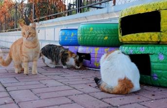 Şanlıurfa Büyükşehir Belediyesi Kedi Evi Projesini Hayata Geçirdi