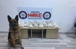 19 kilogram eroini narkotik köpeği 'Sedef'...