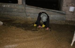 Aşırı Yağış Nedeni Ahırda Bulunan Hayvanlar...