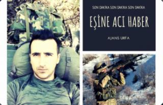 Tunceli'den Şanlıurfa'ya şehit haberi