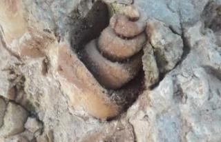 Siverek'te Milyonlarca yıl öncesine ait deniz...