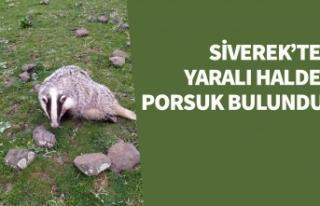 Siverek'te yaralı halde bulundu! - Video Haber