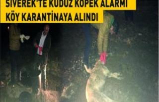 Siverek'te kuduz köpek alarmı köy karantinaya...