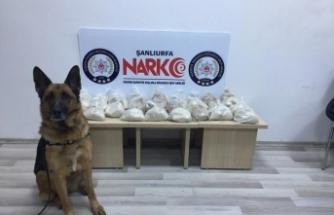 19 kilogram eroini narkotik köpeği 'Sedef' buldu