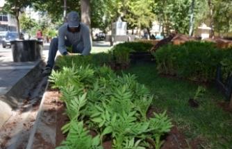 Siverek Belediyesi park ve yeşil alanlara çiçek ekimi yapıyor