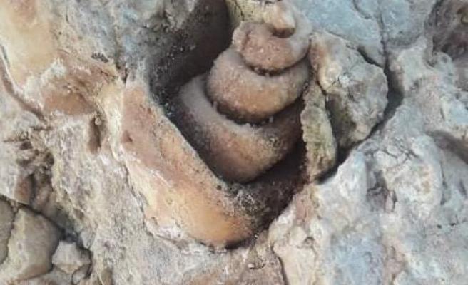Siverek'te Milyonlarca yıl öncesine ait deniz fosili bulundu