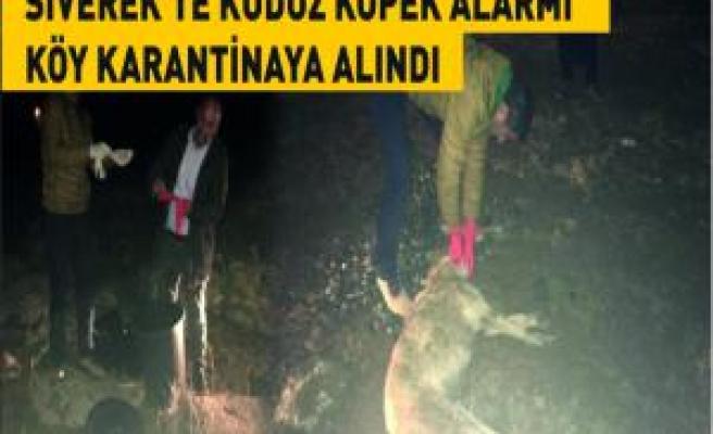 Siverek'te kuduz köpek alarmı köy karantinaya alındı