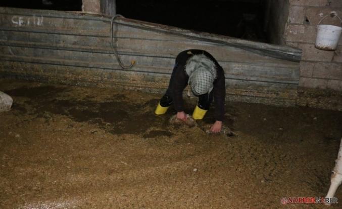 Aşırı Yağış Nedeni Ahırda Bulunan Hayvanlar Telef Oldu